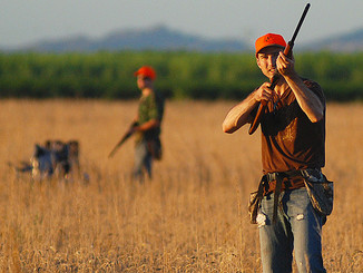 Dove hunting season opener poor to fair in most of region