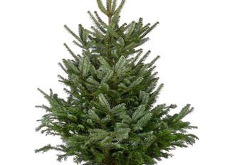 Christmas tree order deadline