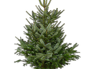 Christmas tree order deadline