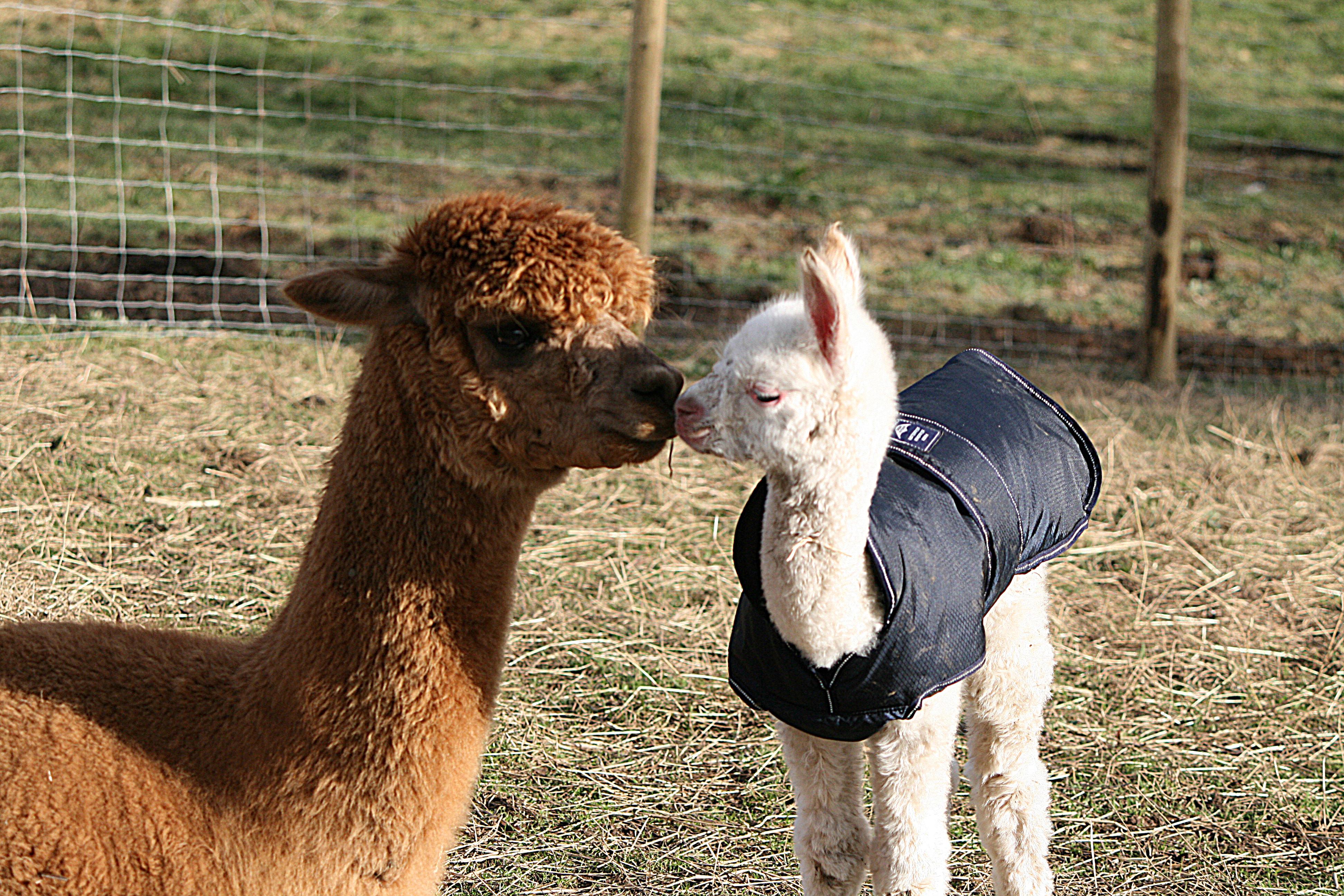Michaela and Spirit kissing