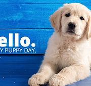 38124-3-23_puppyday.1100w.tn.jpg