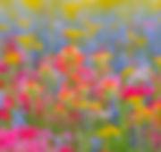 mezz_wildflowers-1024x576.jpg