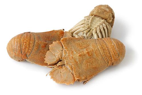 Moreton Bay Bug Med Cooked