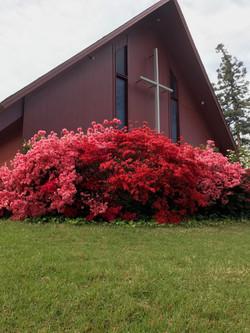 exterior_roses