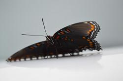 Butterfly underneath