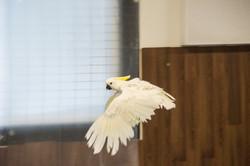 Tiff Fly 4