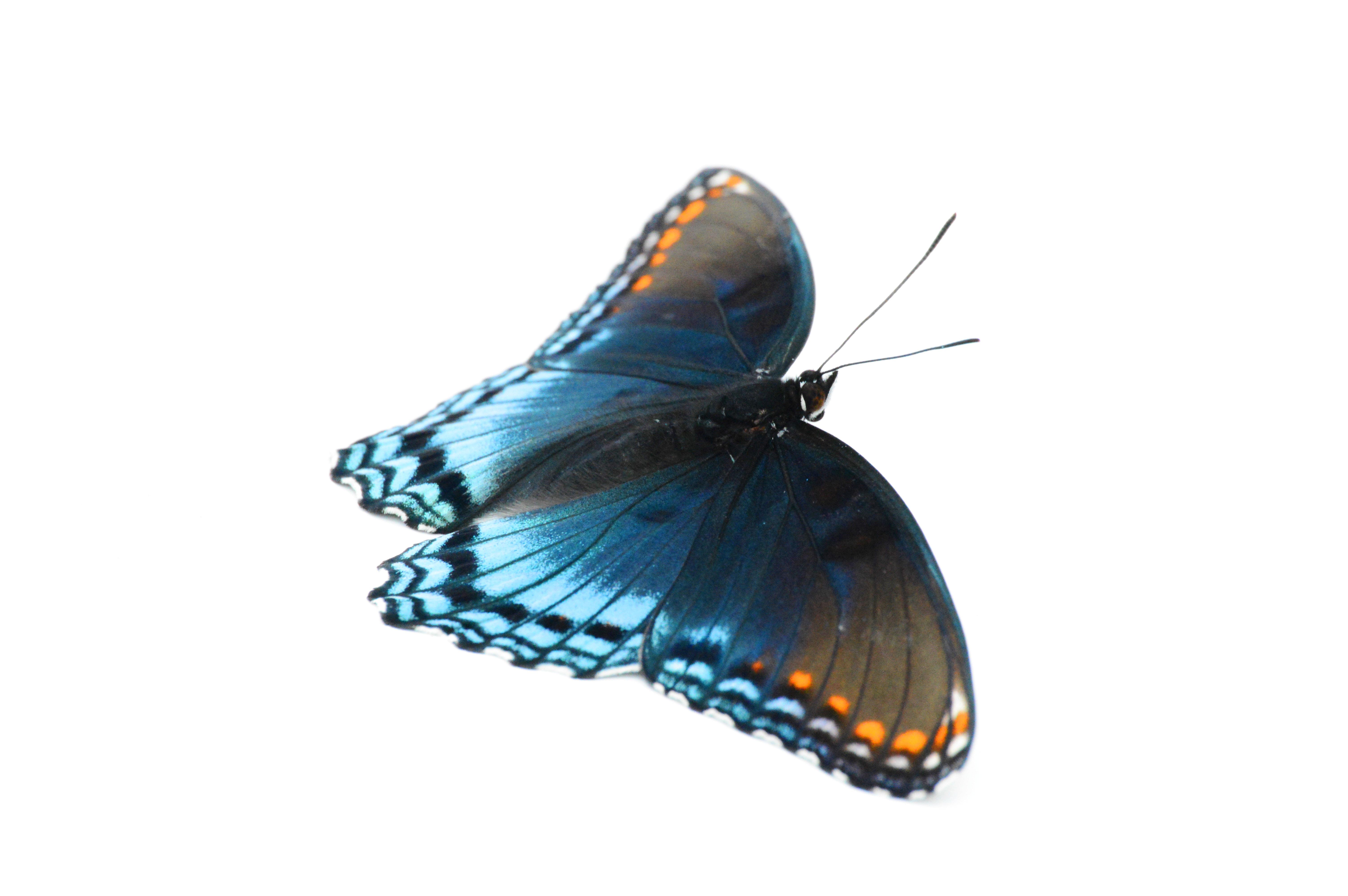 butterfly light wow