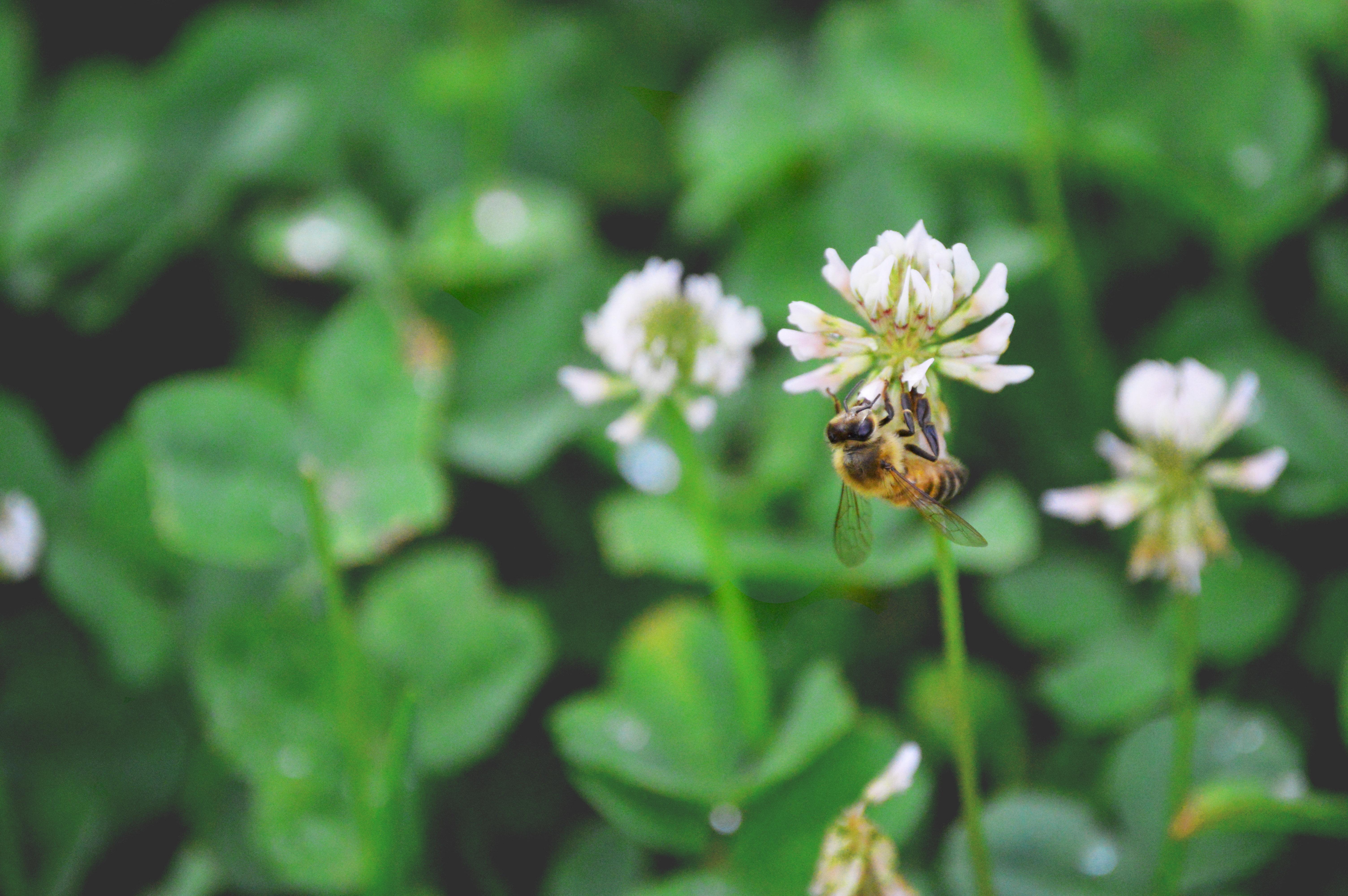 honey bee upside down