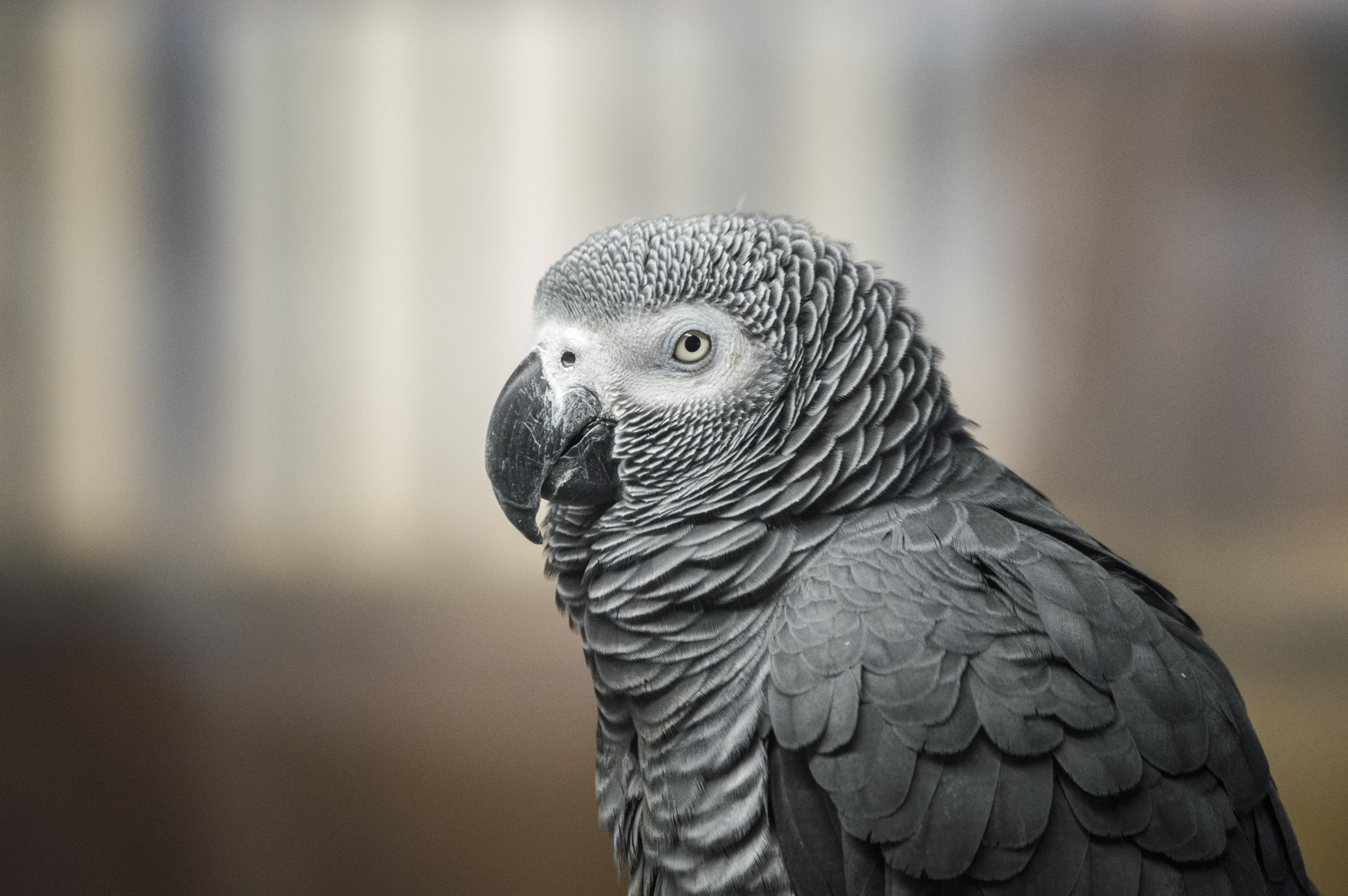 Grey best