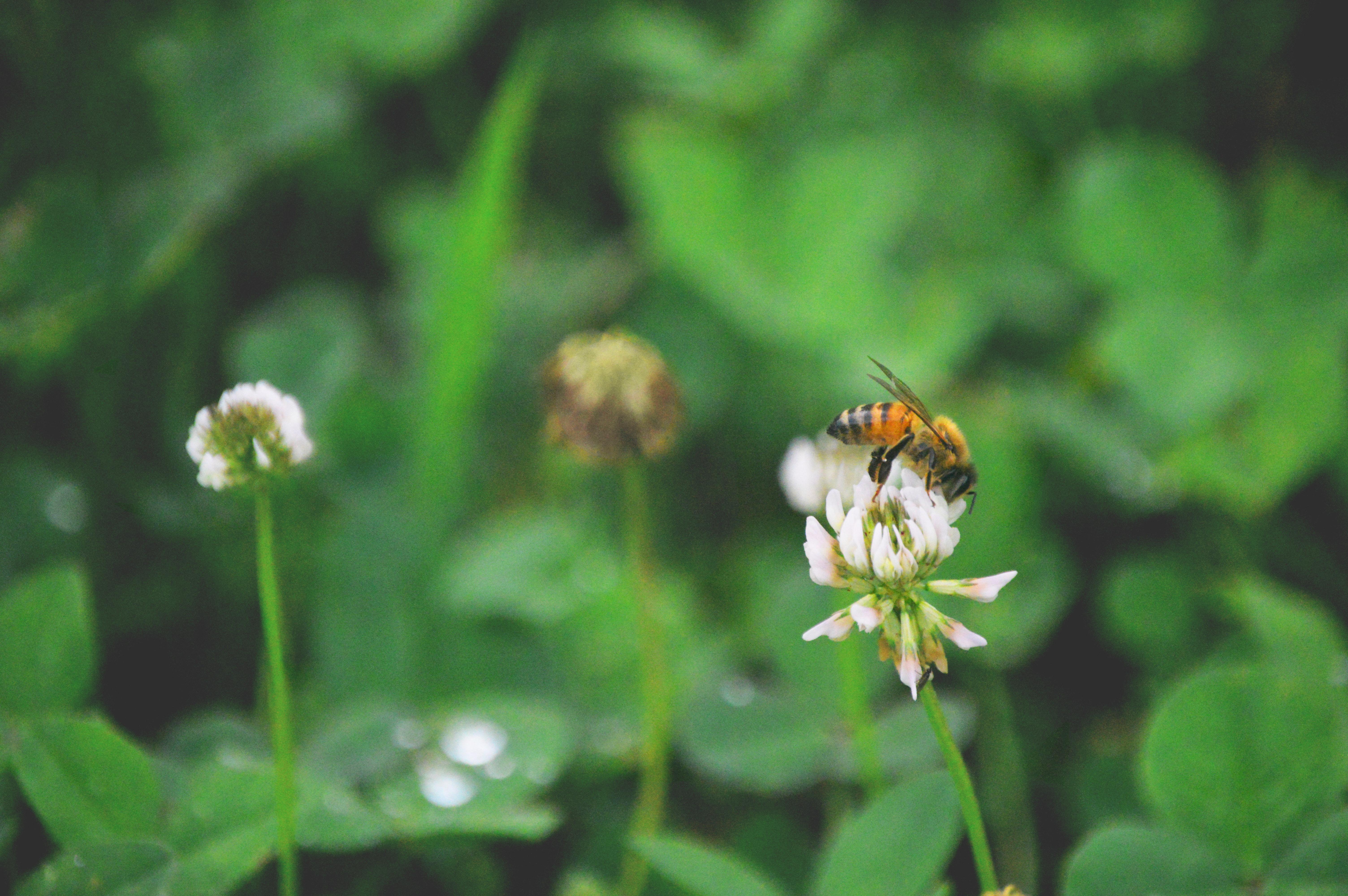 honey bee profile