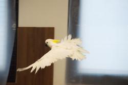 Tiff Fly 2