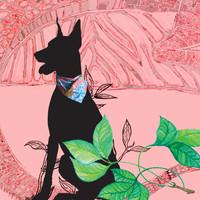 Pañuelo Mascotas Varios Estampados