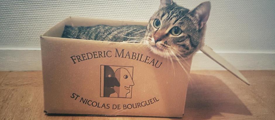 Le Mabileau, chat cartonne ! 😺📦🍾