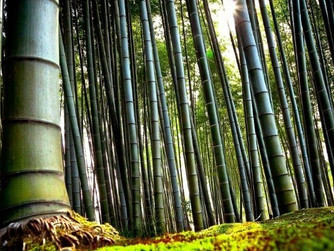 Forty Days Of Success! DAY 16: A LESSON FROM THE CHINESE BAMBOO TREE