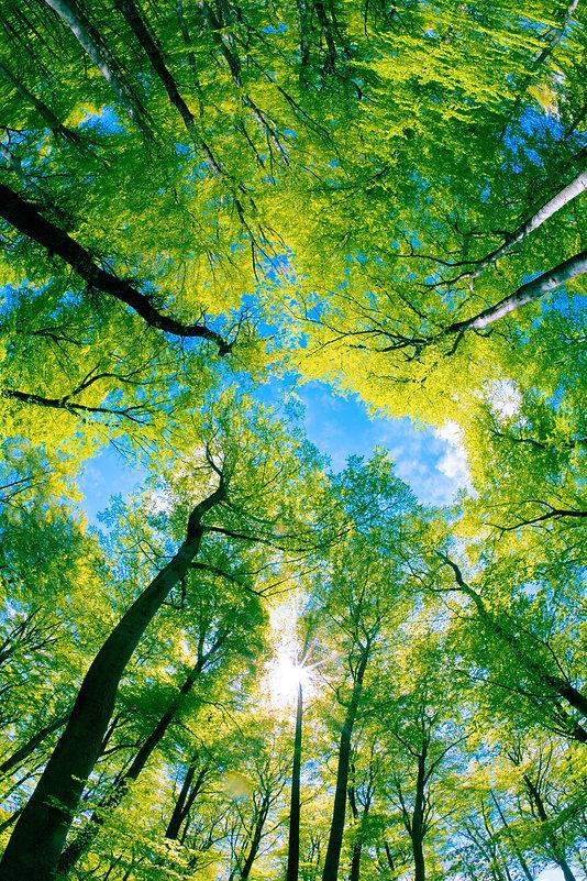 Tree canopy.jpg