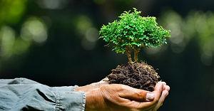 treecare-amenic181.jpg