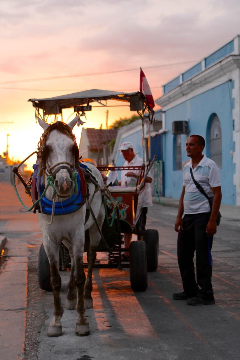 Cienfuegos Horse