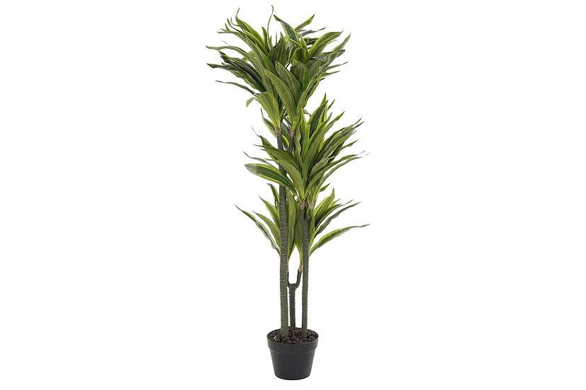 PLANTA PVC DRACAENA