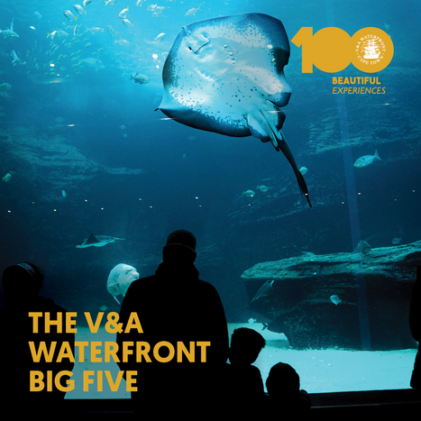 The V&A Waterfront Big Five