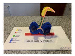 Modelo S. Respiratorio
