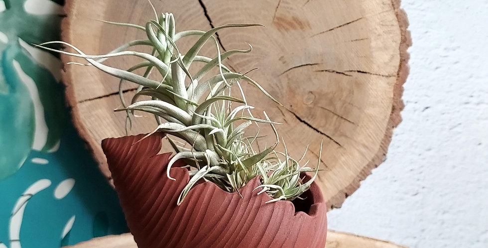 COQUILLAGE 1| habitacle pour les plantes