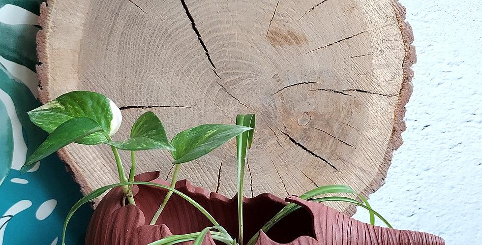 COQUILLAGE 4   habitacle pour les plantes