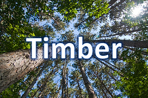 timber REITs 2019.png