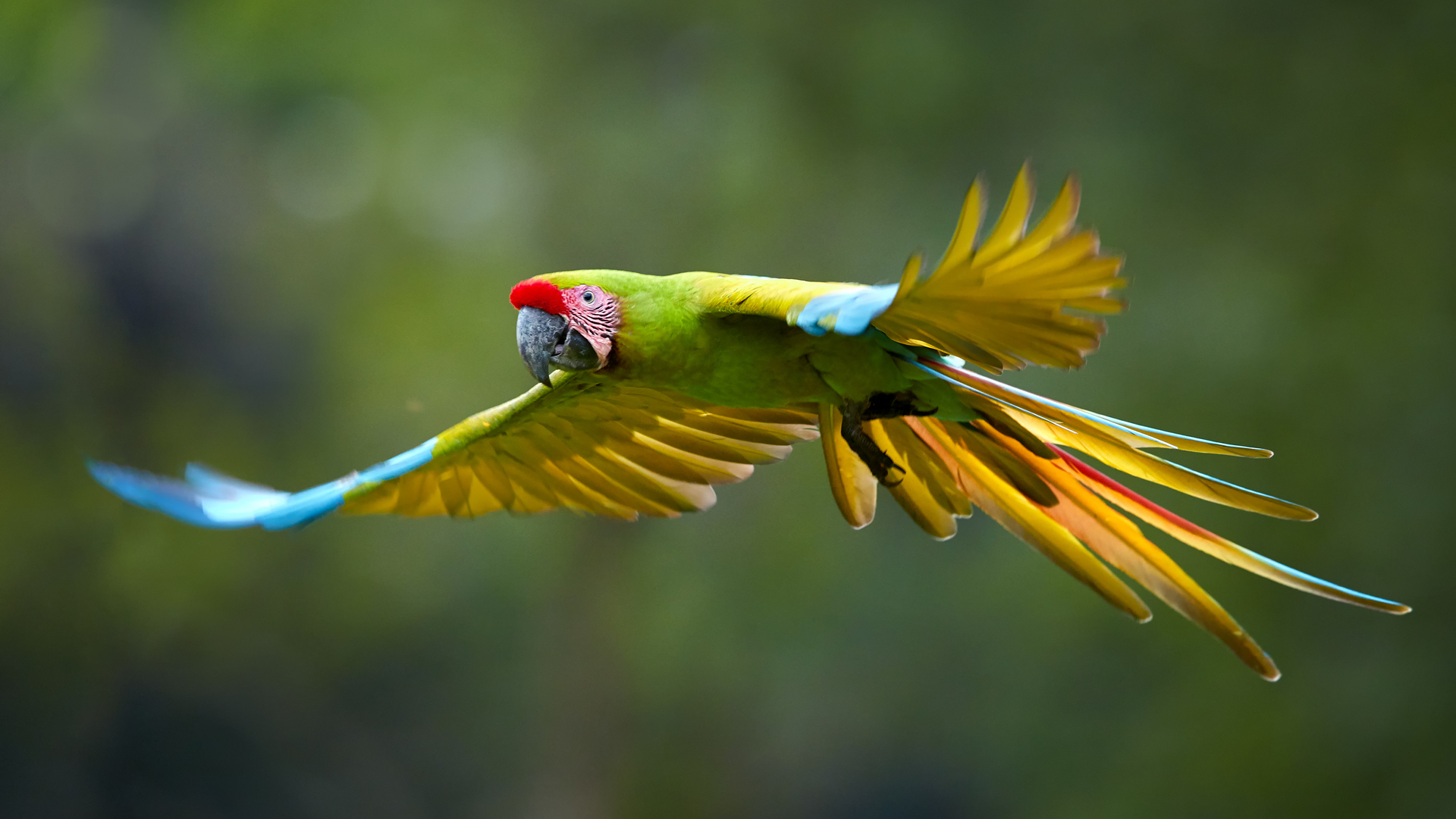 Parrot at Punta Ballena Panama