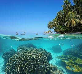 coral restauration.jpg