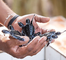 marine conservation.jpg