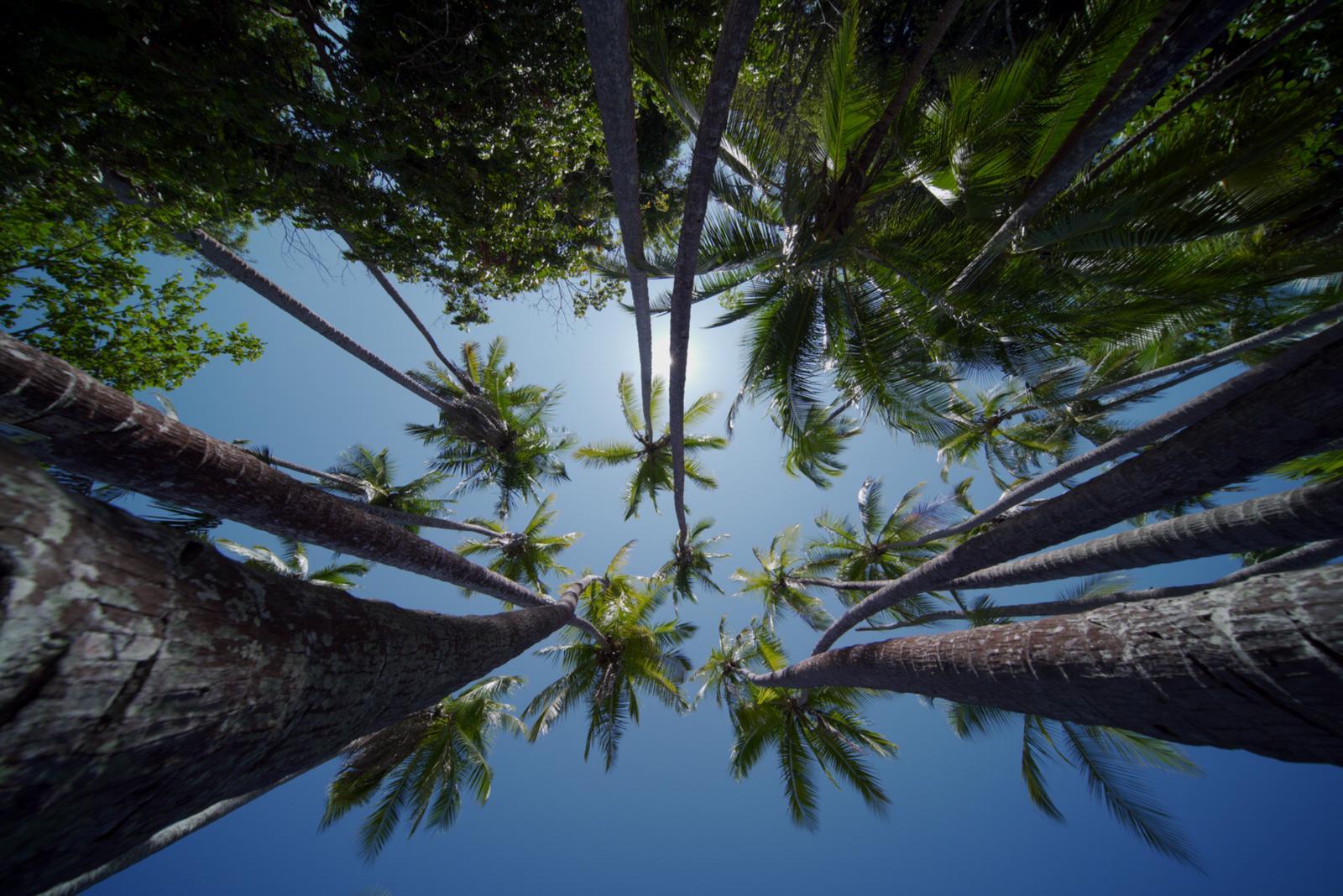 Punta Ballena Palm Beach