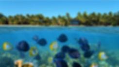 Bocas del Toro Tourism Properties.jpg
