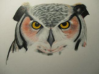 owl3.5.JPG