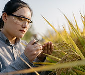 Checking the Crops_edited.jpg