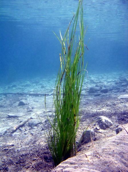 Unterwasserlandschaft Weissensee