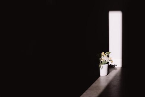 Into Bloom-40.jpg