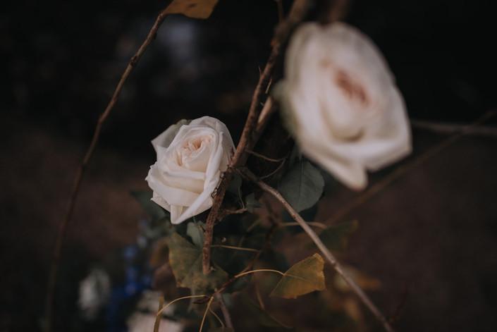 Into Bloom-160.jpg