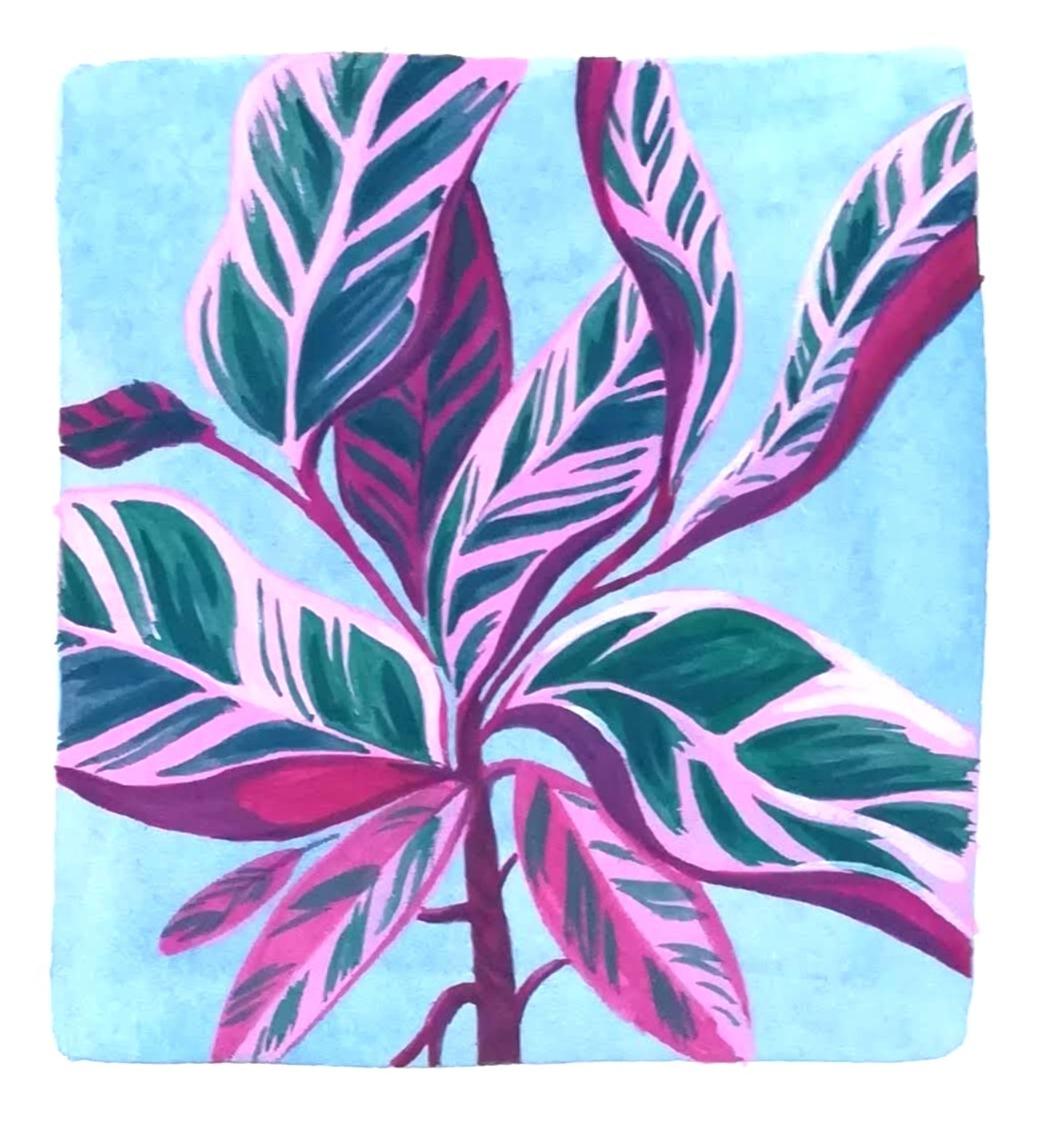Botanical illustration in gouache