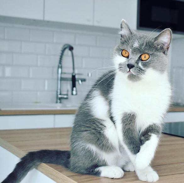 Companion Animal Behaviour Technician in wording