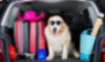 Dog packed and ready to go - Travel Products