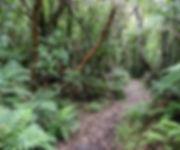 Stewart Island New Zealand.jpg