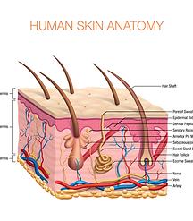 Skin Disorders in Primary Care