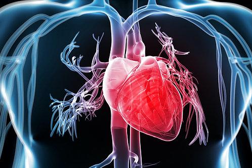 Heart Failure and Hypertension