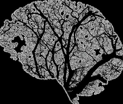 brain tree lsat
