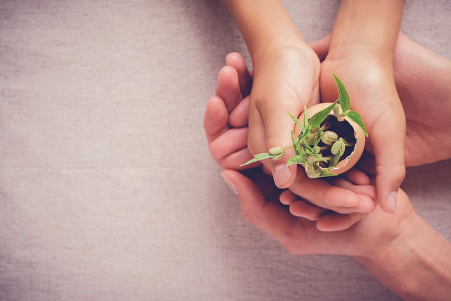 hands holding seedling in eggshells, mon