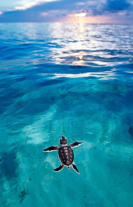 Scuba dive, playa del carmen, tulum, cozumel, cenote, cancun, snorkel