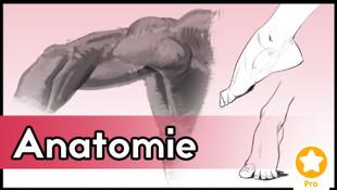 Visages féminins 1 - Structure