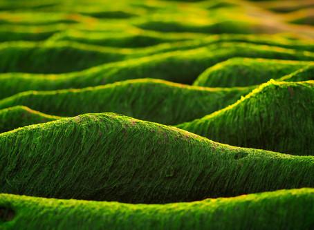 Was und wozu - Extrakt der Alge Padina pavonica?