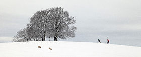 Michael Green_FUN IN THE SNOW.jpg