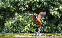 Gone Fishing - Stuart Batchelar.jpg